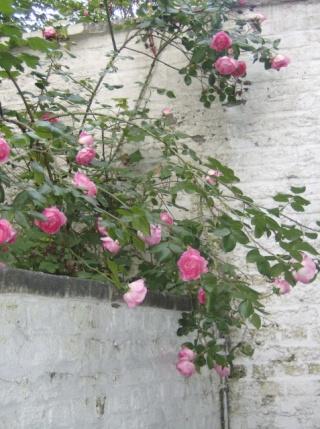 je ne sais pas quoi faire de mon jardinet Photo_13