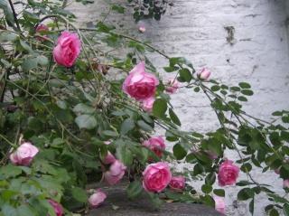 je ne sais pas quoi faire de mon jardinet Photo_14