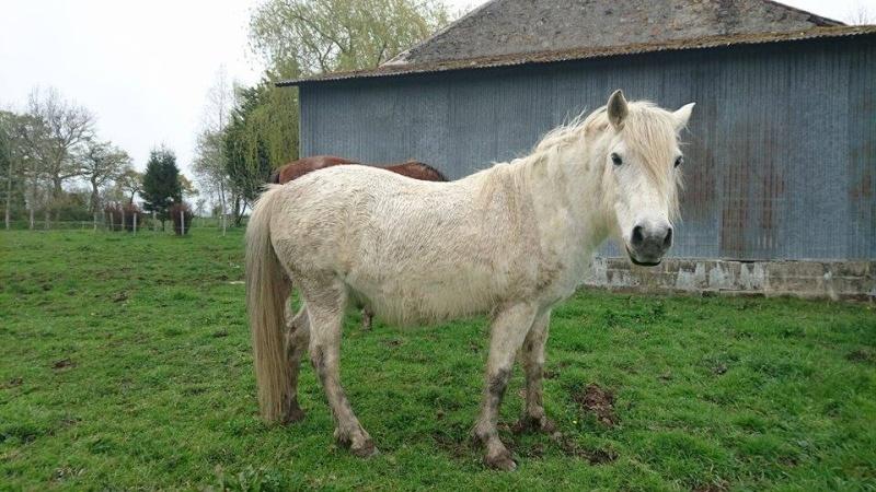 KIWI - ONC poney typé Shetland né en 1998 - adopté en juillet 2015 par Alexandra 12993310