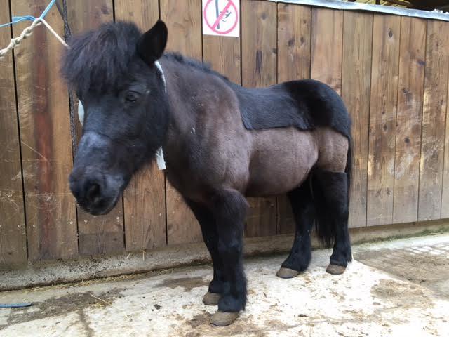 NOIROT - ONC poney né en 1997 - adopté en juillet 2016 par Leila F9dfa010