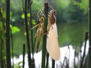 Le biotope (ou animaux de ruisseau) 1213