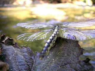 Le biotope (ou animaux de ruisseau) 1313