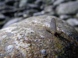 Le biotope (ou animaux de ruisseau) 2_peti10