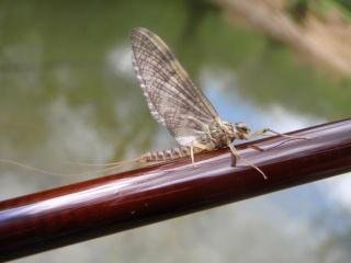 Le biotope (ou animaux de ruisseau) 3_brun10