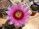 Blütensaison 2009 voll im Gange - Seite 4 Echino10