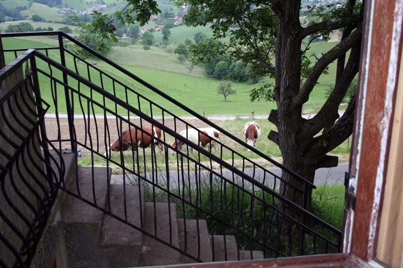 Aide réalisation jeu de la vache (enfants) Img_0010