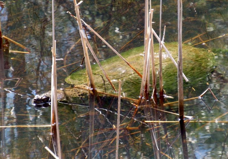 Même les bêtes aquatiques sortent de leur hibernation! Image17