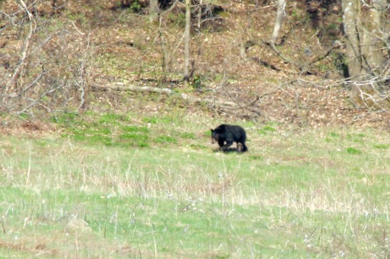 Un ours! Image22