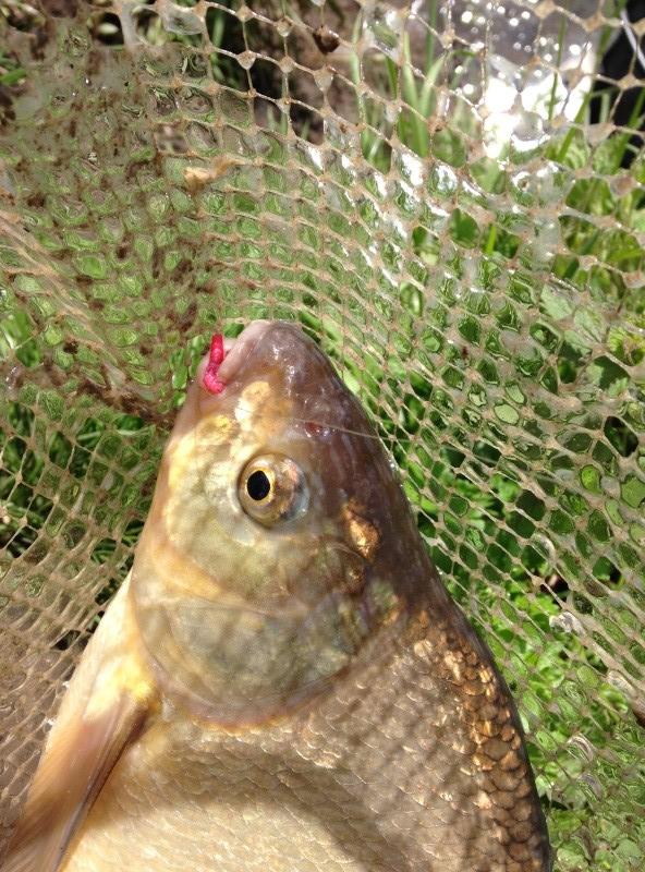 enfin une pêche potable Img_1411