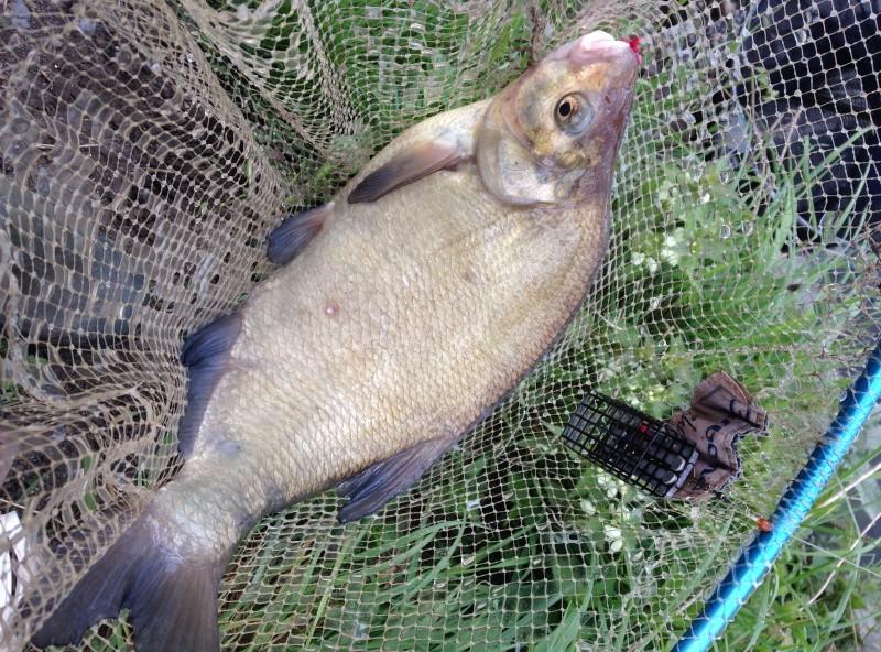 enfin une pêche potable Img_1413