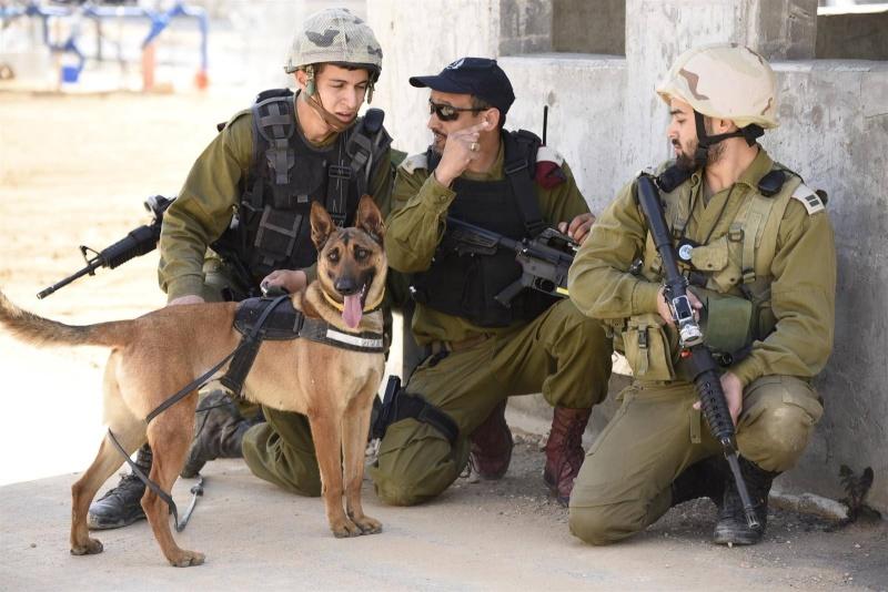 le mois de juin : les maitres chiens de l'armée d'israel 13246310