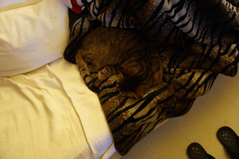 mon chat en mode camouflage! Dsc01910