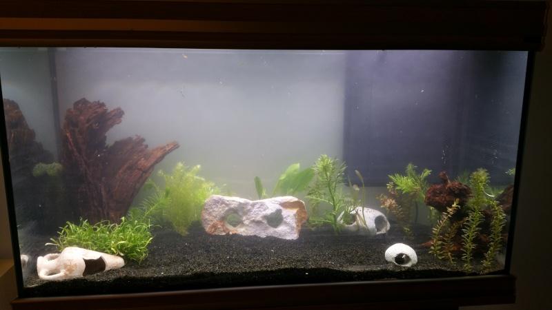 Mon premier aquarium (243L) 20160311