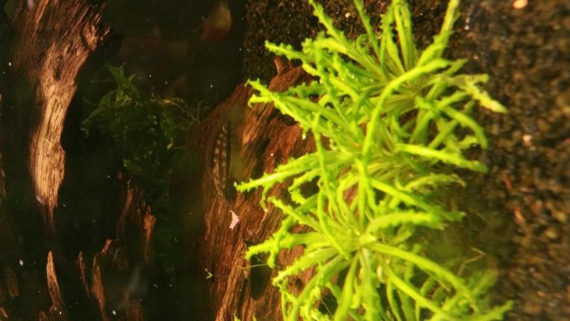 Mon premier aquarium (243L) - Page 2 20160511