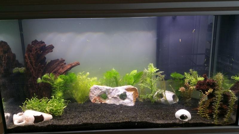 Mon premier aquarium (243L) J710