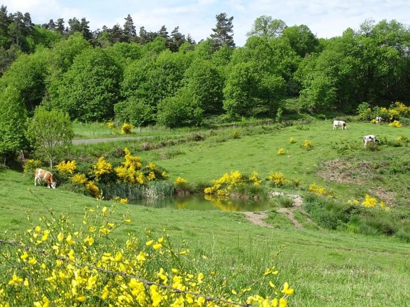 6R6 dans le Cantal Dsc00817