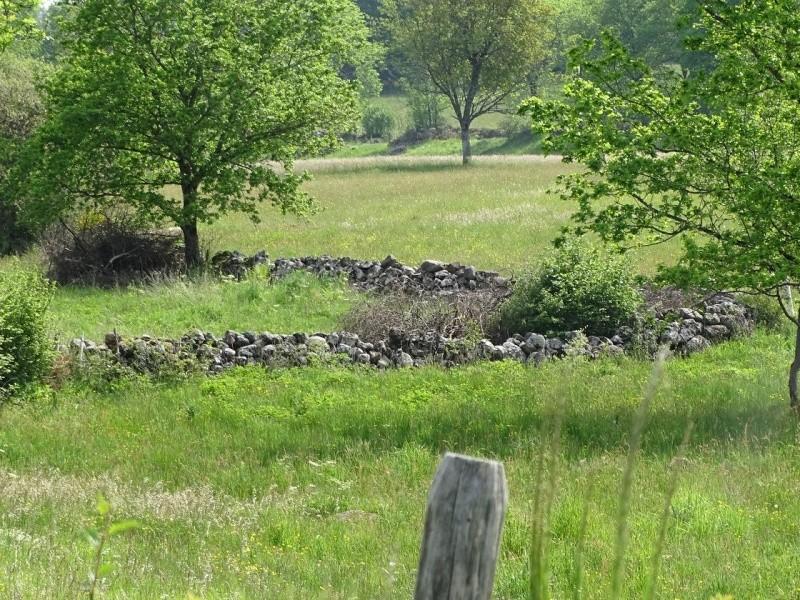 6R6 dans le Cantal Dsc01018