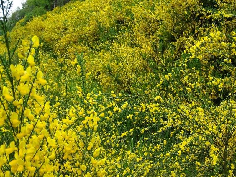 6R6 dans le Cantal Dsc01020