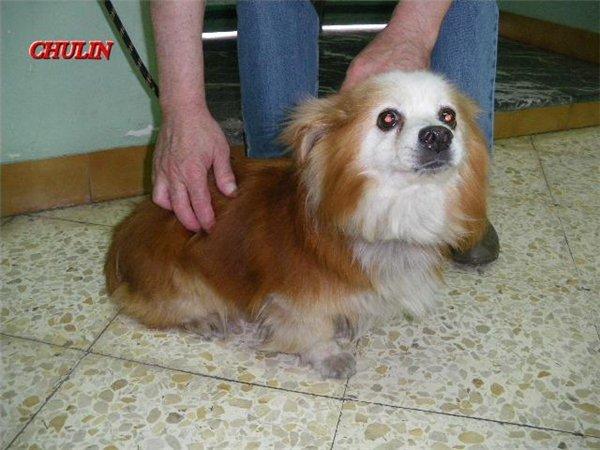 Chulin, enfermo en la perrera. Bilbao Chulin10