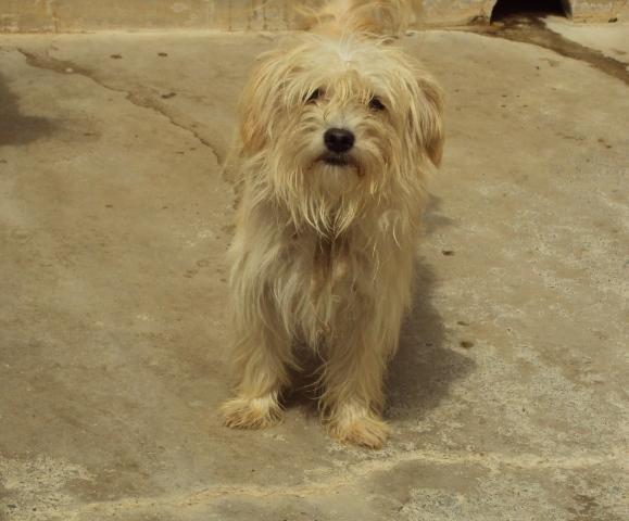 Keko, peludito 1 año. Madrid Keko10