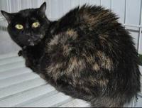 Trini, gata abandonada de 12 años Trini10