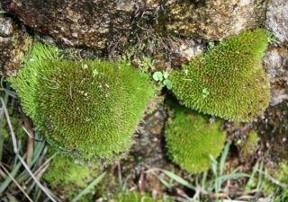 sols et plantes bio-indicatrices  Philon11