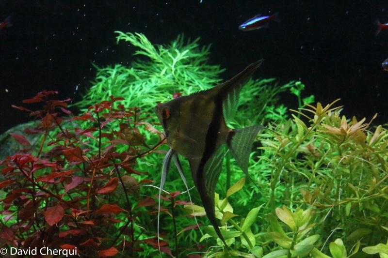 [MAJ PHOTOS p2] Mon 450L Amazonien Planté  - Page 2 08052015