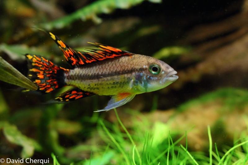 [MAJ PHOTOS p2] Mon 450L Amazonien Planté  - Page 2 08052039