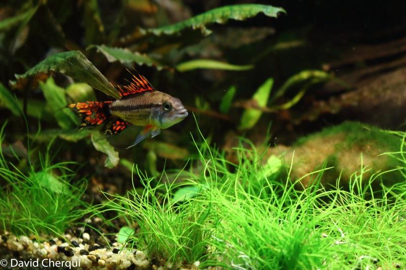 [MAJ PHOTOS p2] Mon 450L Amazonien Planté  - Page 2 08052040