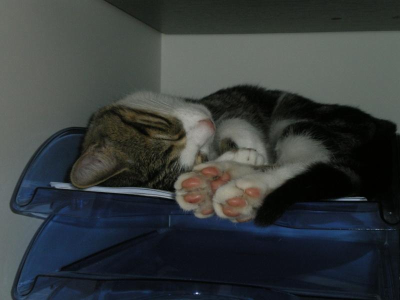 Minimid petit chaton male 2mois 1/2 - Page 2 Imgp4912