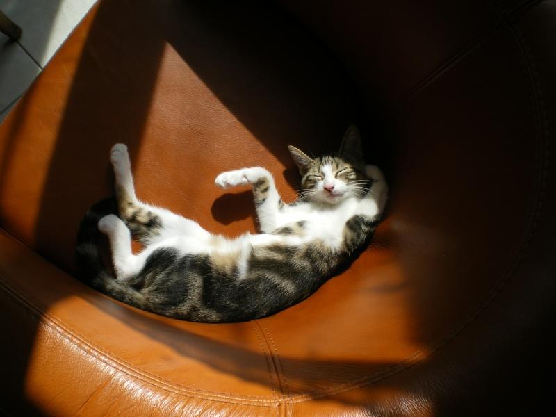 Minimid petit chaton male 2mois 1/2 - Page 2 Kadaj_12