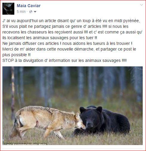 Les animaux sauvages Captur11