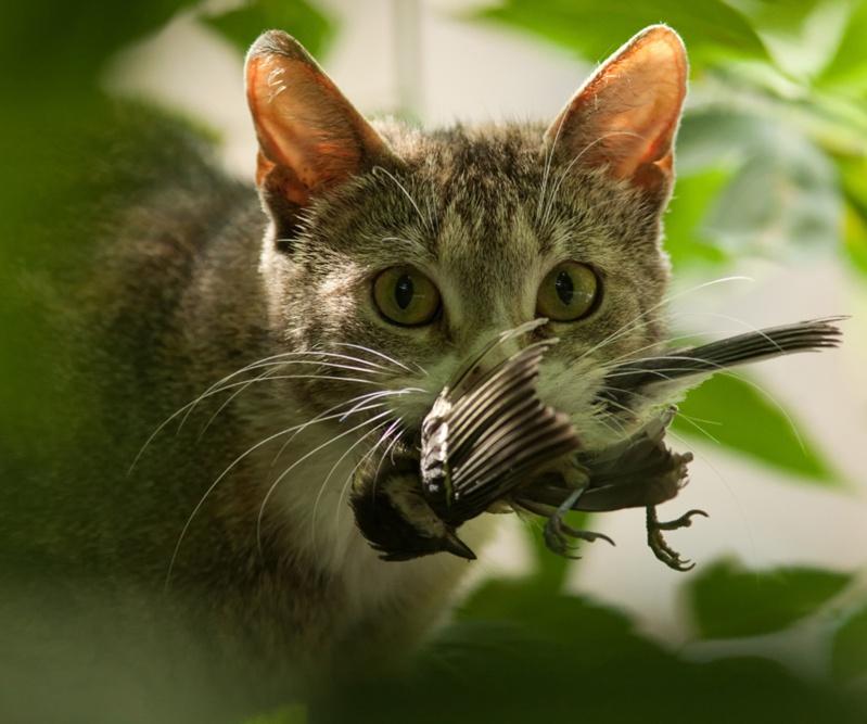 vermifugez votre chat ! Chat-o10