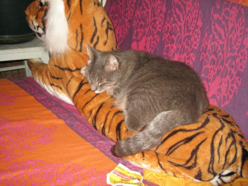 je cherche des figurines chats Img_4210