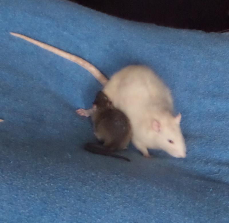 les chroniques de Wild, rat sauvage Sam_4513