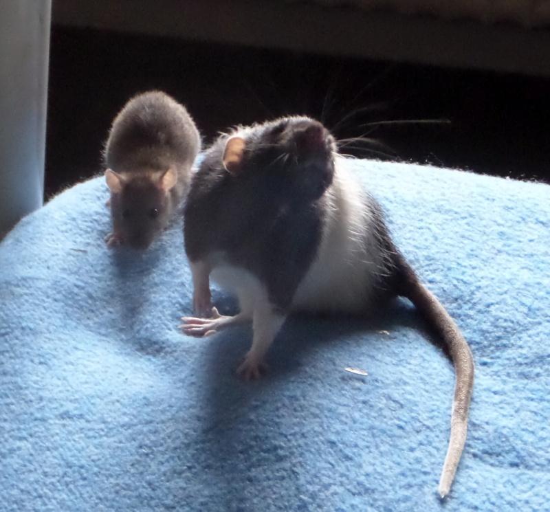 les chroniques de Wild, rat sauvage Sam_4516