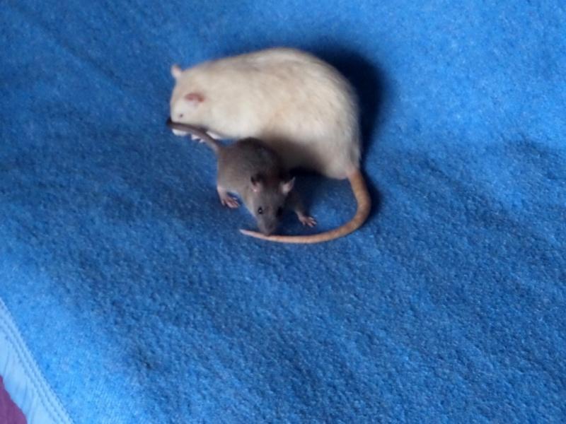les chroniques de Wild, rat sauvage Sam_4518