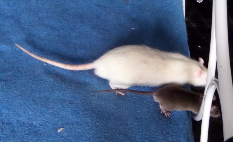 les chroniques de Wild, rat sauvage Sam_4519