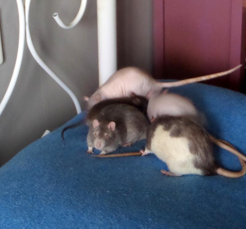 les chroniques de Wild, rat sauvage Sam_4520