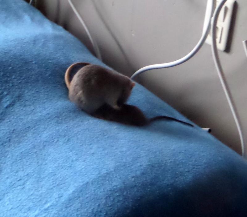 les chroniques de Wild, rat sauvage Sam_4612