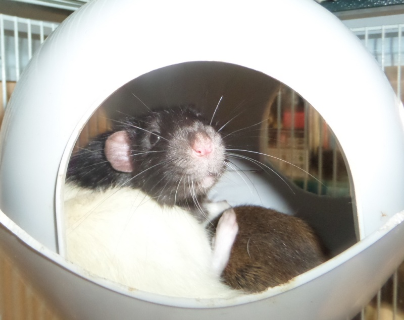les chroniques de Wild, rat sauvage Sam_4618