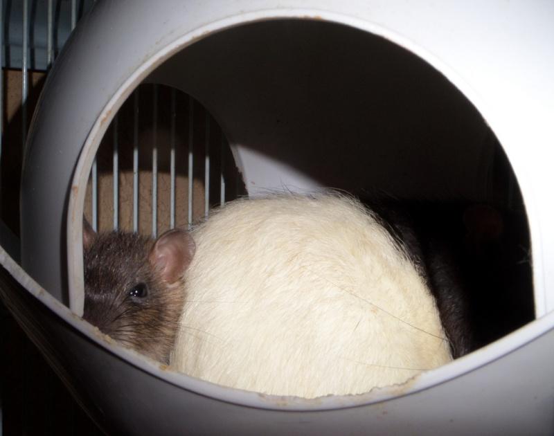 les chroniques de Wild, rat sauvage Sam_4619
