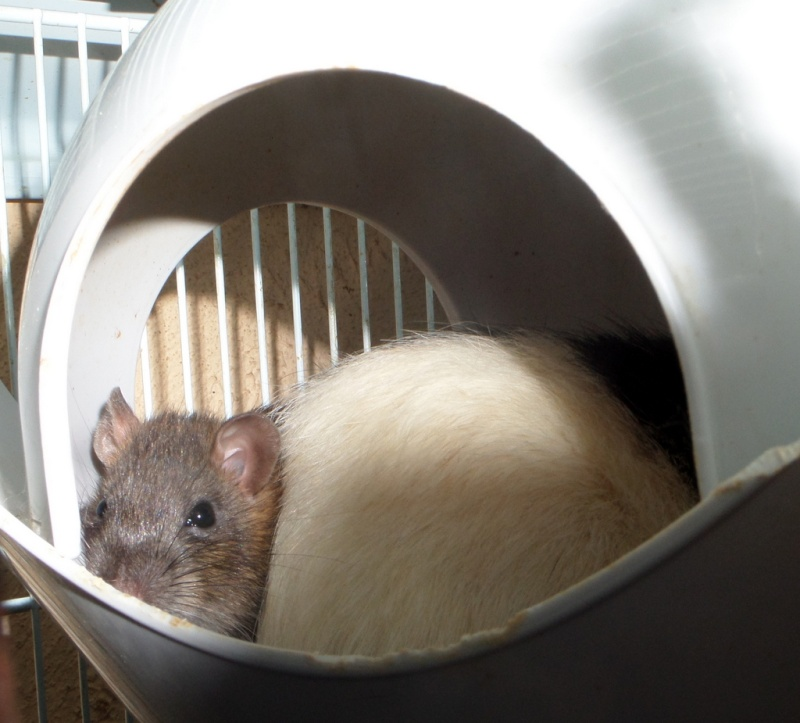 les chroniques de Wild, rat sauvage Sam_4620