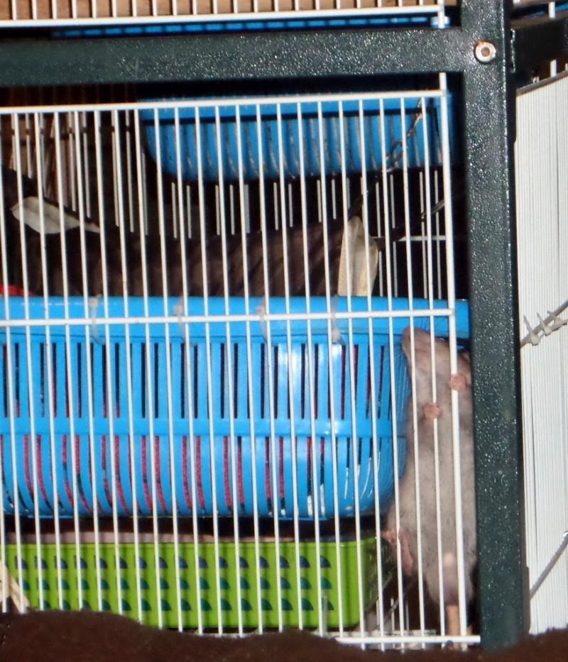 les chroniques de Wild, rat sauvage - Page 2 Sam_4623