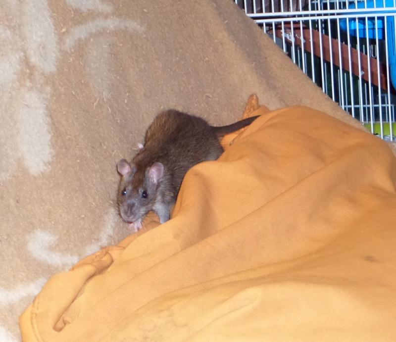 les chroniques de Wild, rat sauvage - Page 2 Sam_4718