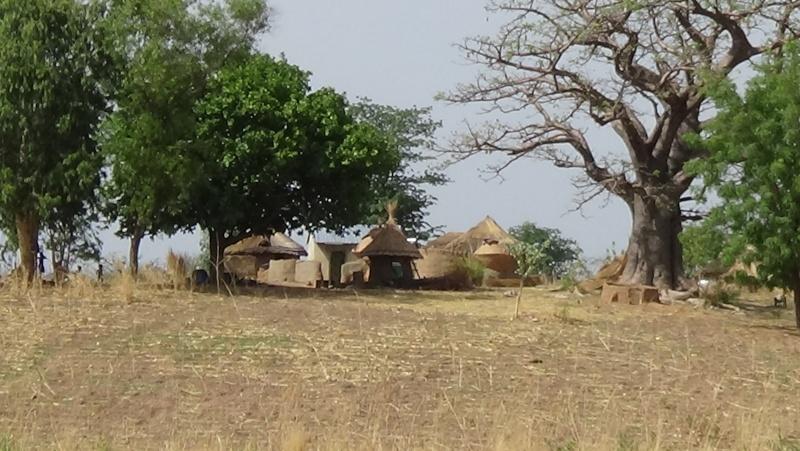Guinée /Mali / Côte d'Ivoire /Ghana et plus si affinités   2016 - Page 2 Dsc00418