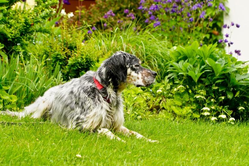 Bildertagebuch - Leon, freundlicher und anhänglicher Setterbursche liebt es bei Wind und Wetter durch die Wälder zu streifen ...  _dsc4214