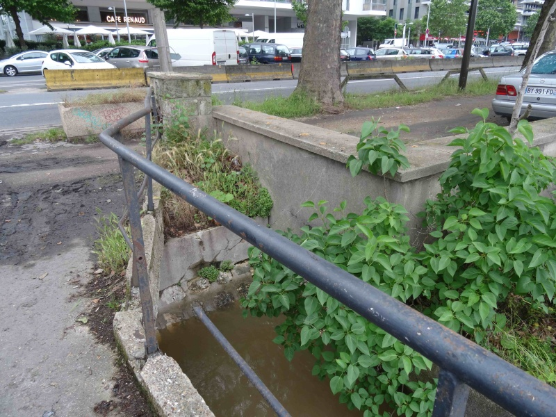 Crues de la Seine Dsc08722