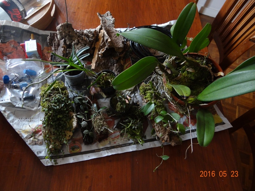 Commande orchidée de chez Bens-jungle . Dsc07713