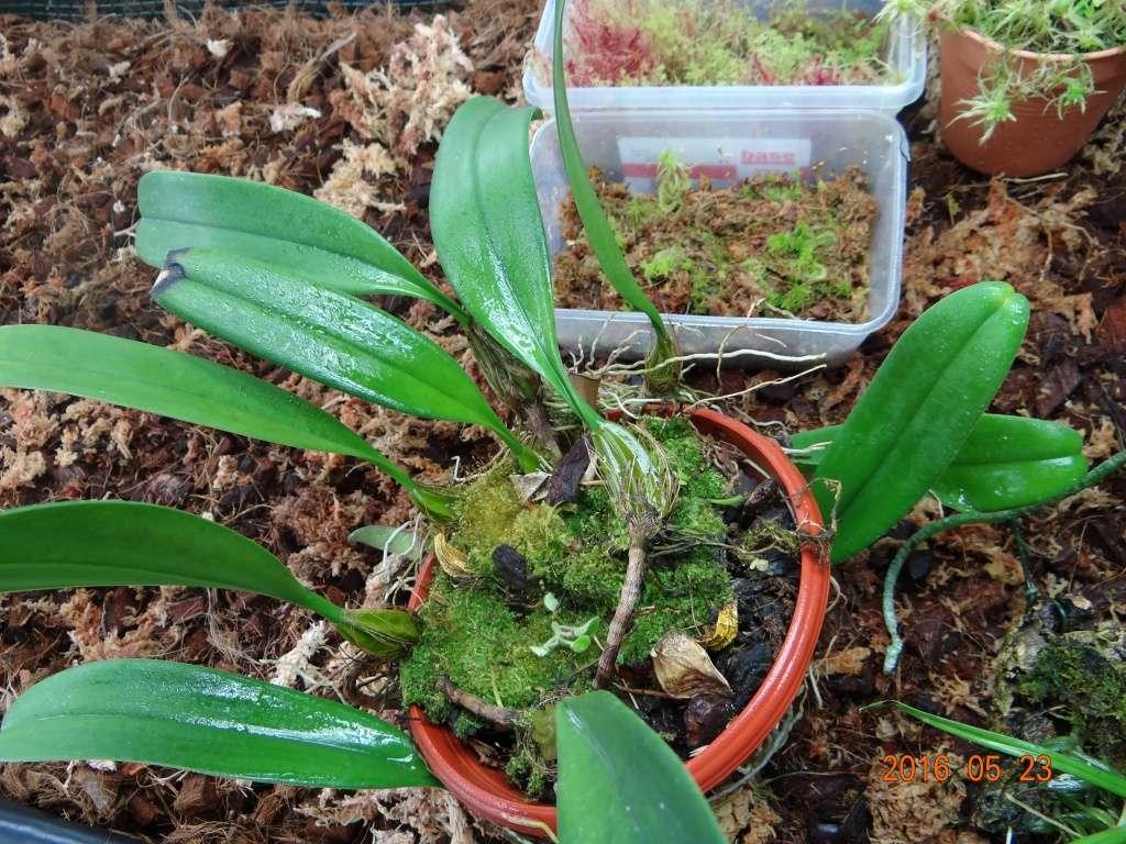 Commande orchidée de chez Bens-jungle . Dsc07714